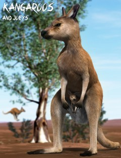 Kangaroos and Joeys