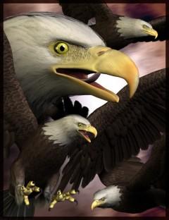 Eagle 2.0 (Upgrade from Eagle 1)