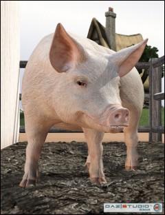 DAZ Pig