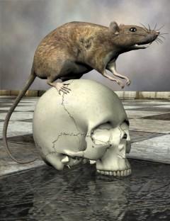 Noggin's Rat