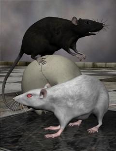 Noggin's Pet Shop Rats