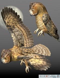 Noggin's Poser Owl