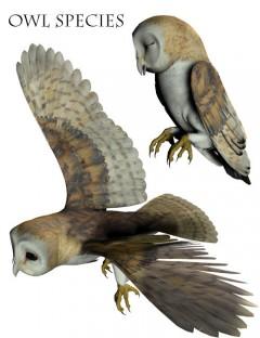 Noggin's Owl Species