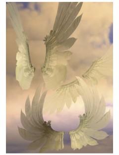 Dreamer Wings