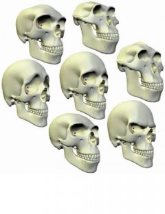 Morphing Skull