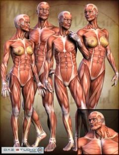 Millennium Muscle Maps