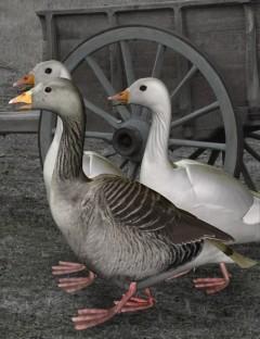 Noggin's Goose