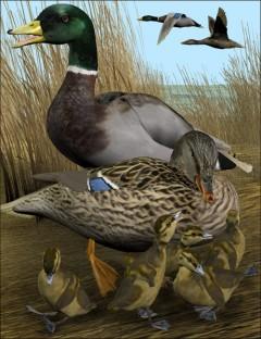 Noggin's Duck- Mallard