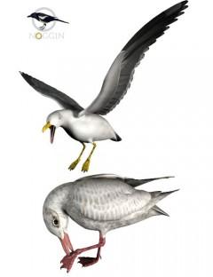 Noggin's Seagull Set