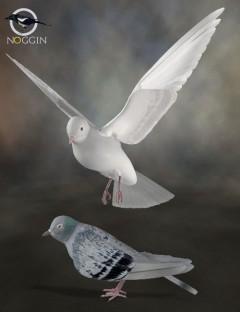 Poser Pigeon / DAZ Dove