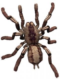 Noggin's Poser Tarantula