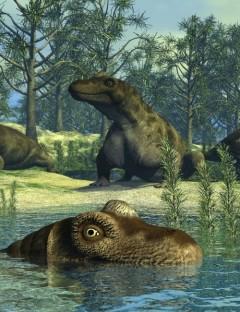 KeratocephalusDR