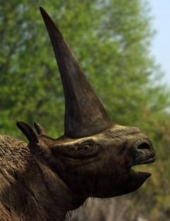 ElasmotheriumDR