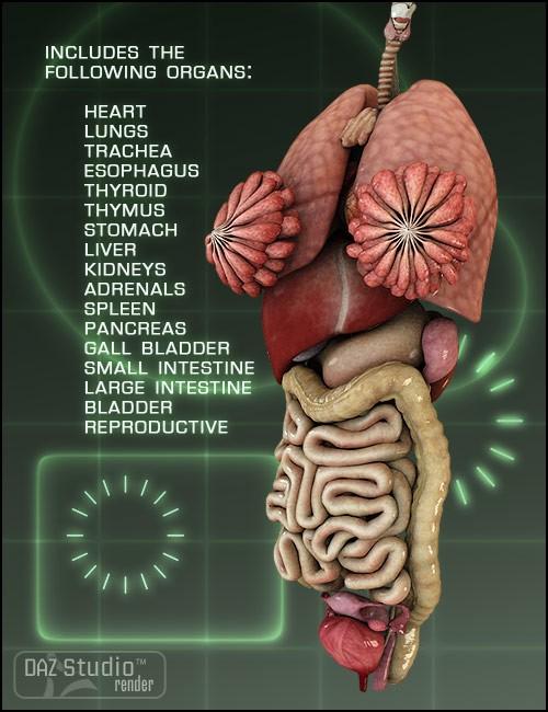 victoria 4 internal organs