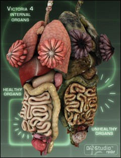 Michael 4 Internal Organs Human Anatomy For Daz Studio