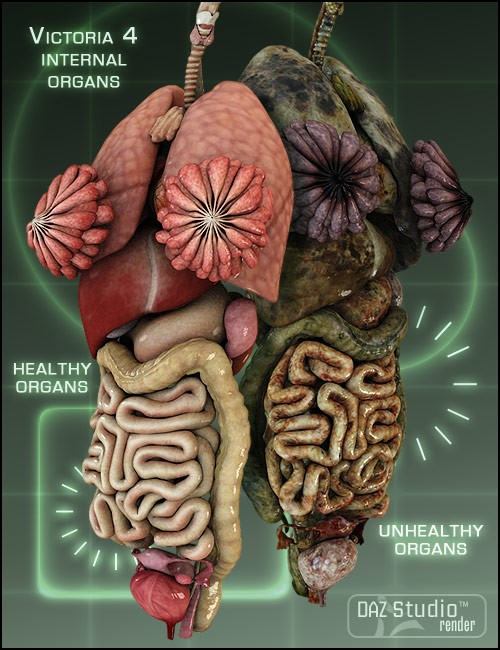 victoria 4 internal organs human anatomy for daz studio