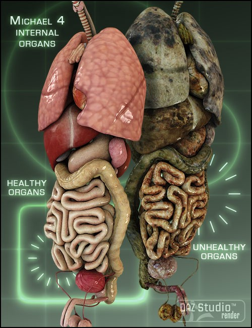 Michael 4 Internal Organs | Human Anatomy for Daz Studio and Poser