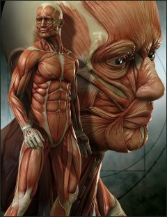 Michael 4 Muscle Maps