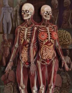 Anatomy 4 Pro Bundle