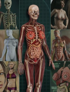 Female Anatomy Bundle