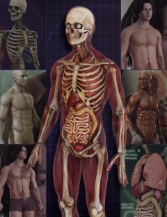 Male Anatomy Bundle
