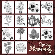 PB- Spring Flowering
