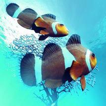 3D Clownfish