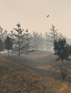 Trees for the Forest