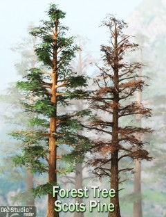 Forest Tree- Scots Pine