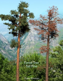 Forest Tree- Tall Pine