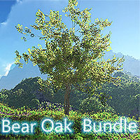 Bear Oak Bundle