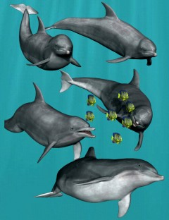 Dolphin Poses