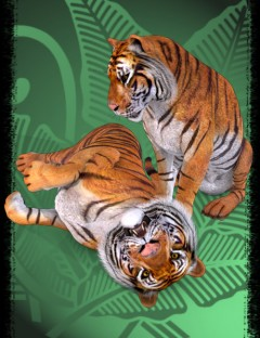 Tigers Eye - Poses for the MilBigCat