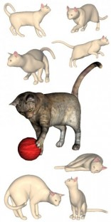 Feline Discovery Poses