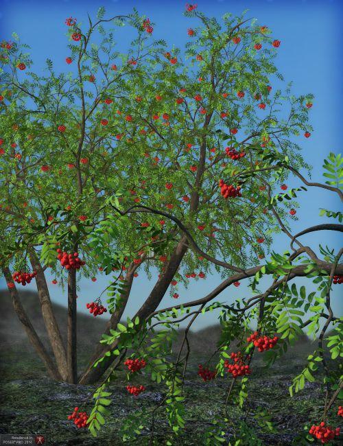 Rowan Trees Megapack