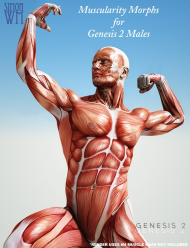 Muscularity Morphs for Genesis 2 Male(s)