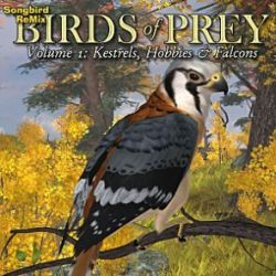 Songbird ReMix Birds of Prey Vol 1- Kestrels, Hobbys & Falcons