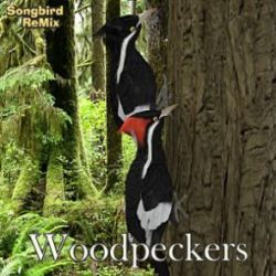 Songbird ReMix Woodpeckers