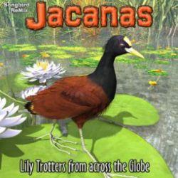 Songbird ReMix Jacanas