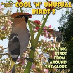 Songbird ReMix Cool & Unusual 3