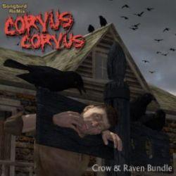 Songbird ReMix Corvus corvus