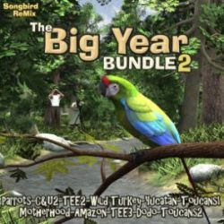 Songbird ReMix Big Year 2 Stack