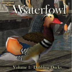 Songbird ReMix Waterfowl Vol 1- Dabbling Ducks
