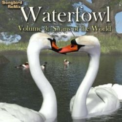 Songbird ReMix Waterfowl Vol 3 - Swans of the World