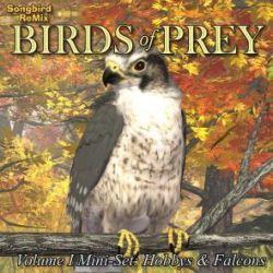 Songbird ReMix Birds of Prey Vol 1 Mini-Set- Hobbys & Falcons