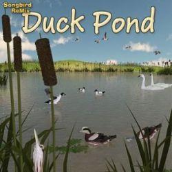 Songbird ReMix Duck Pond