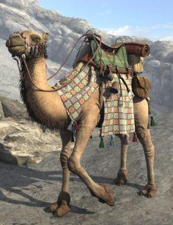 My Camel Camelia HD