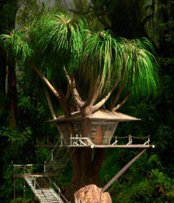 AJ Tree House 2