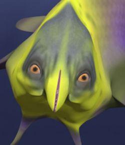 Dolfiny