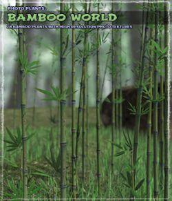 Photo Plants: Bamboo World